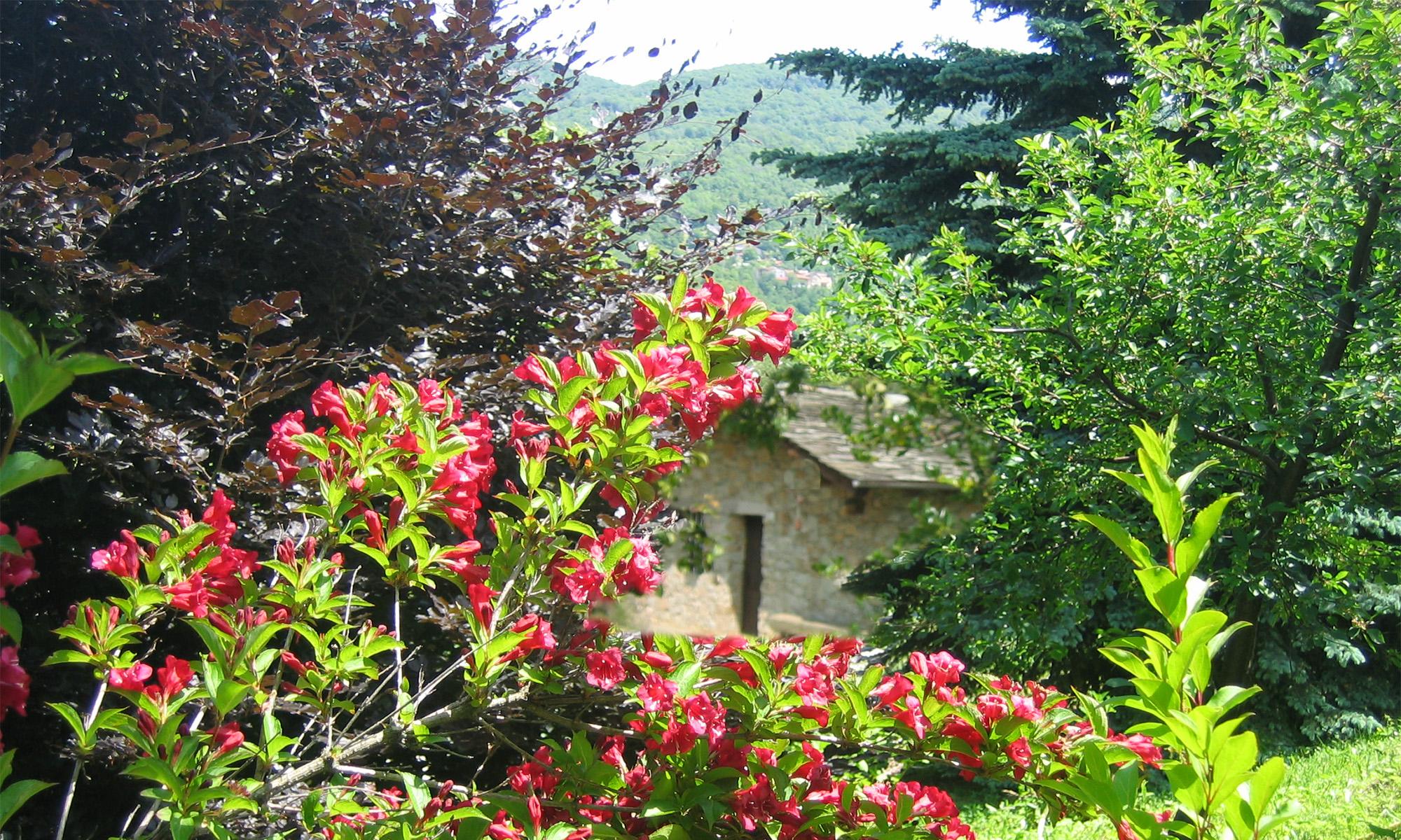 """Bella giornata """"La casa nel bosco"""""""
