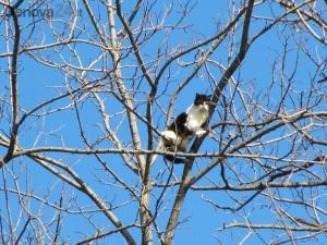 gatto-albero-vigili-7216