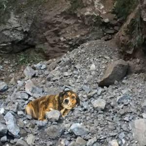 cane caduto